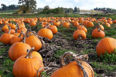 The Best Pumpkin Patches and Haunted Houses in Portland