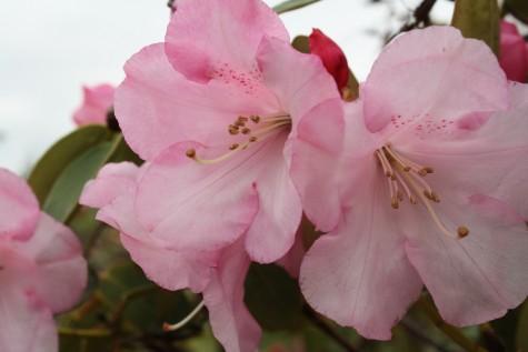 Spring Photo Gallery