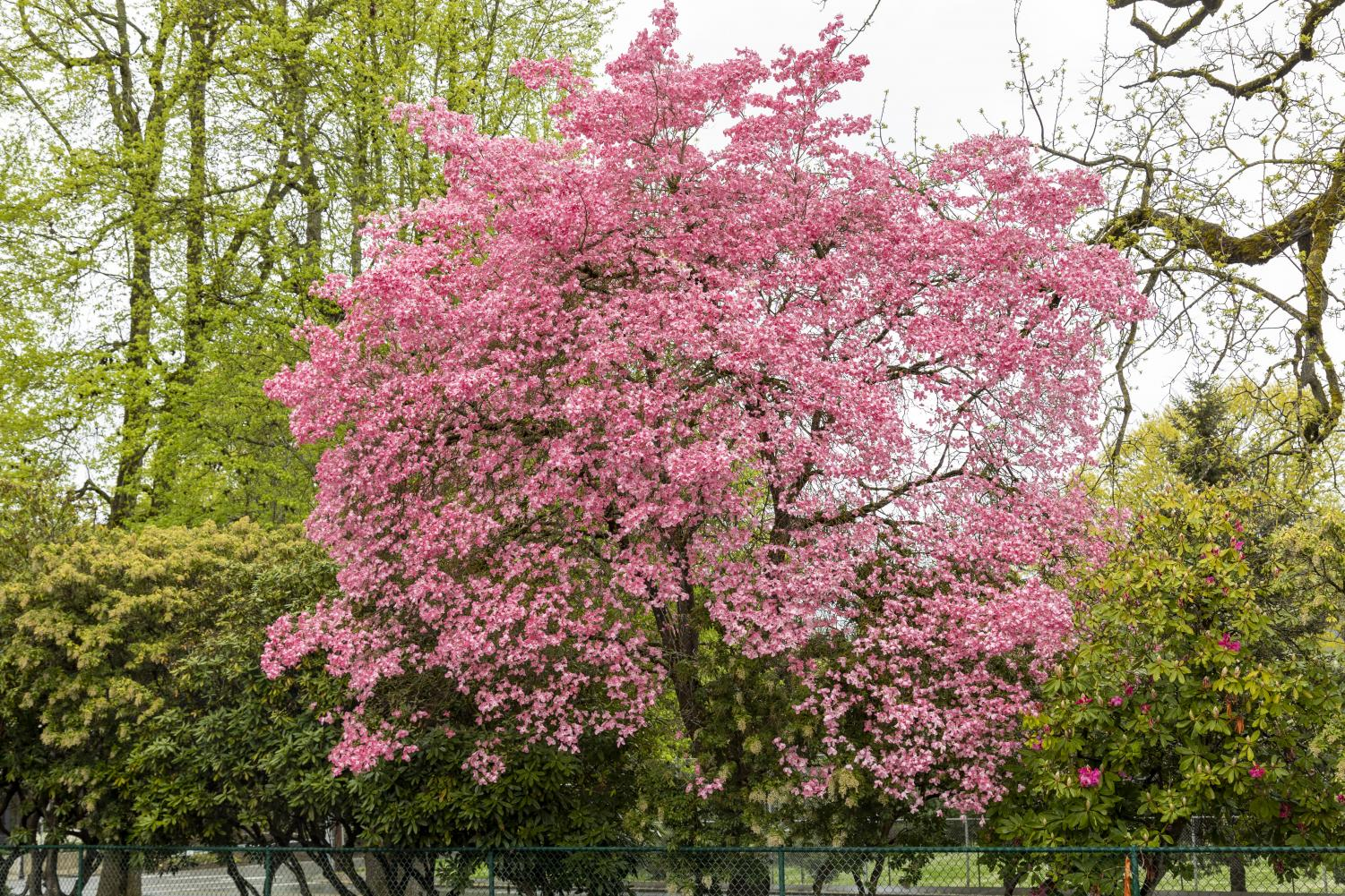Signs+of+Spring+Begin+to+Appear+Around+the+Metro+Area