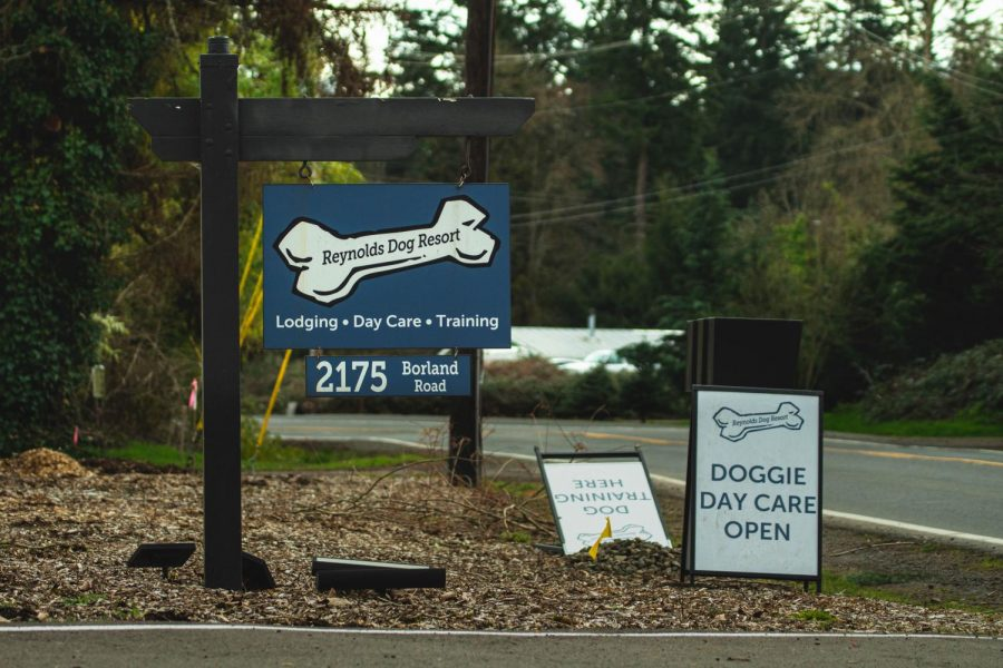 """Ellen Dierckes has been working at Reynold's Dog Resort for almost six months. During the pandemic, """"we've actually just had an increase in the number of dogs that are coming for daycare, training and boarding,"""" she said. """"But training especially, there's so many dogs that kind of fit the ten [month] to one year [age] that are definitely quarantine dogs."""""""
